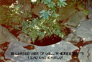 Enhanced view of the Well where Kira's head was washed.